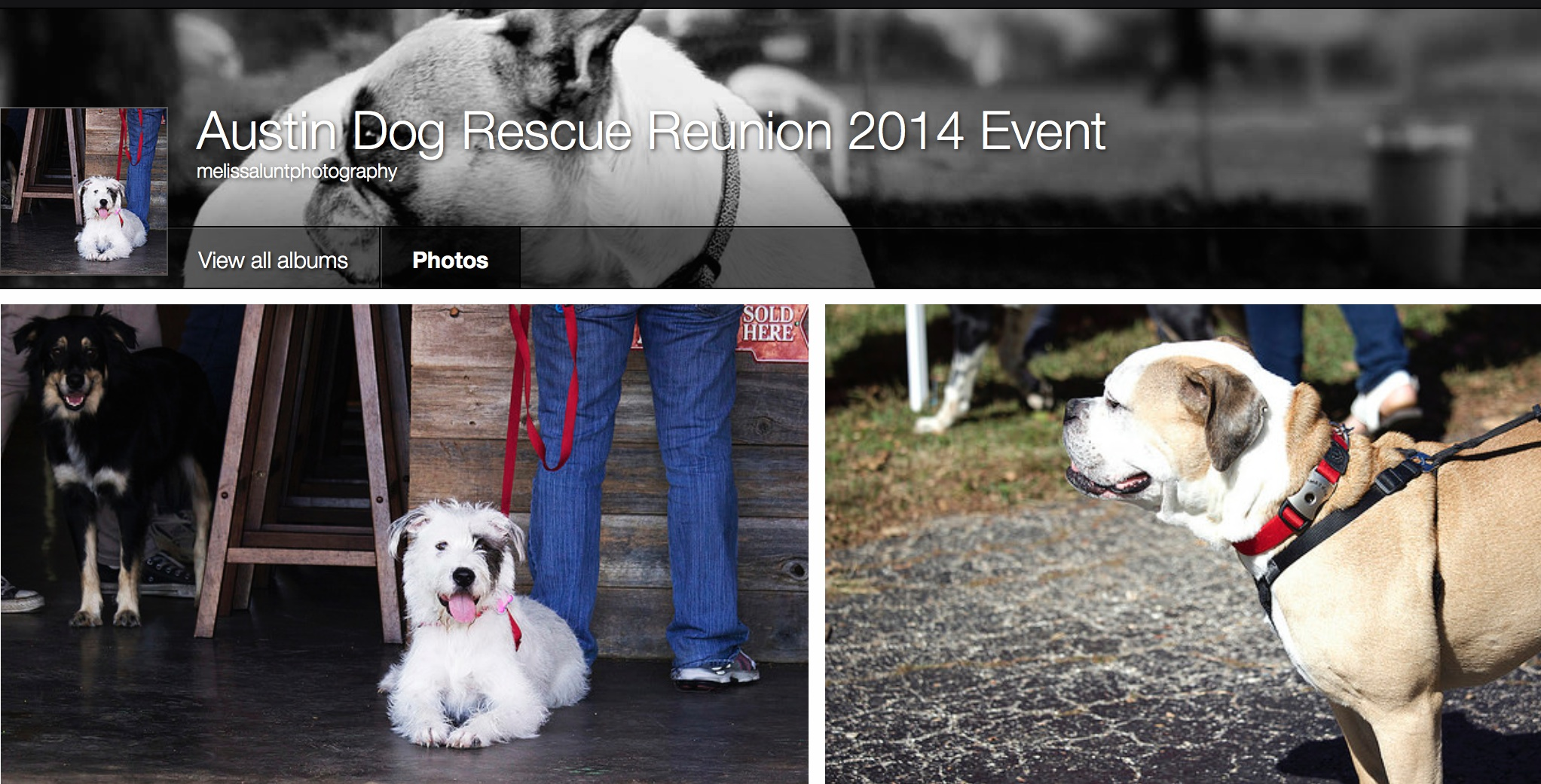 Special day for the Dog House....Austin Dog Rescue Reunion.  See pictures from the event: https://www.flickr.com/photos/128344095@N02/sets/72157646881356993/