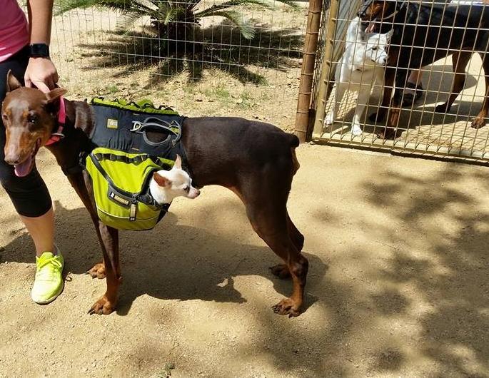 Dog in pouch.jpg