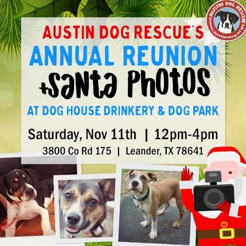 Austin Dog Nov 11 2017 .jpg