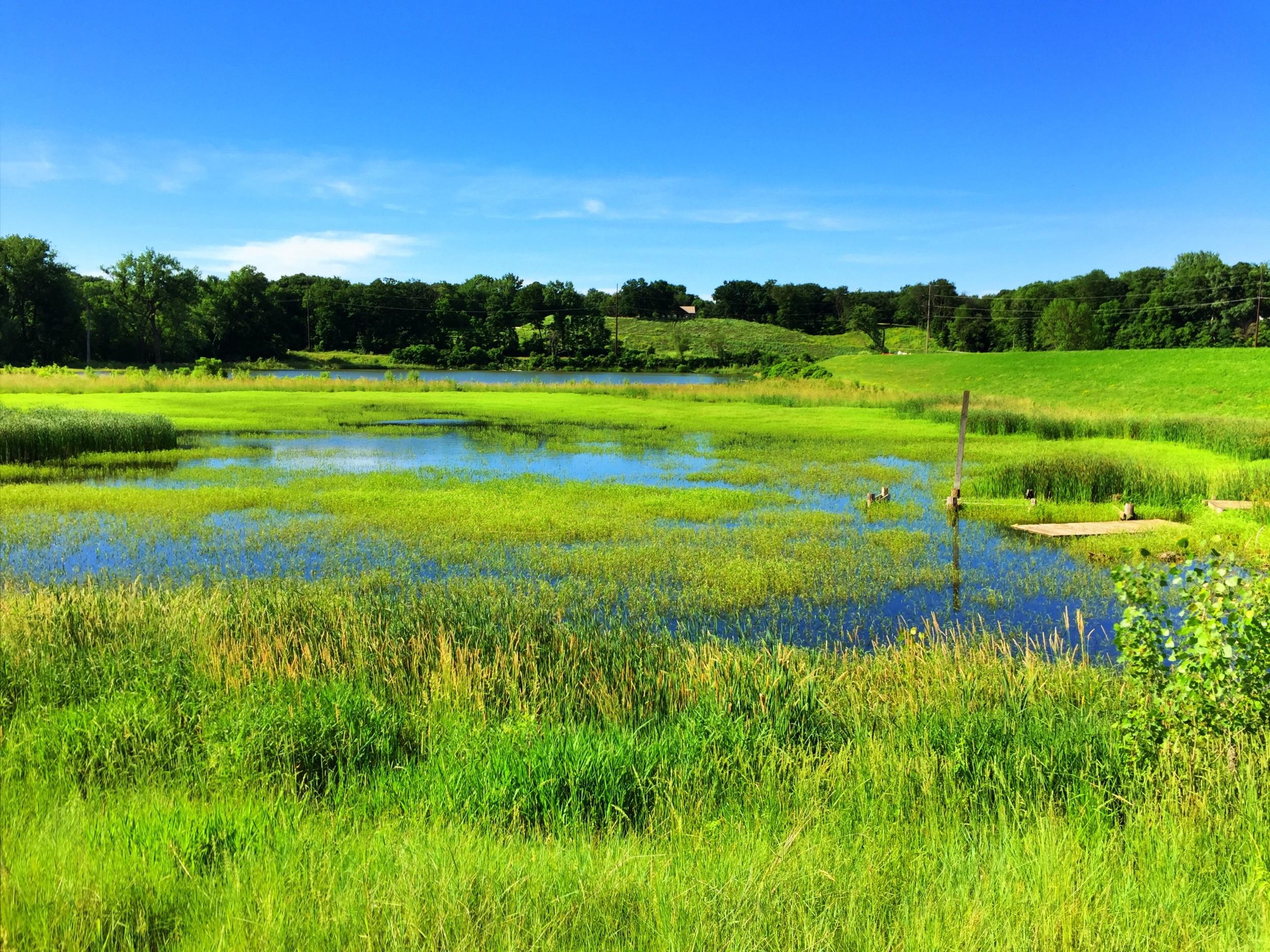Riverview lagoon is a wetland again