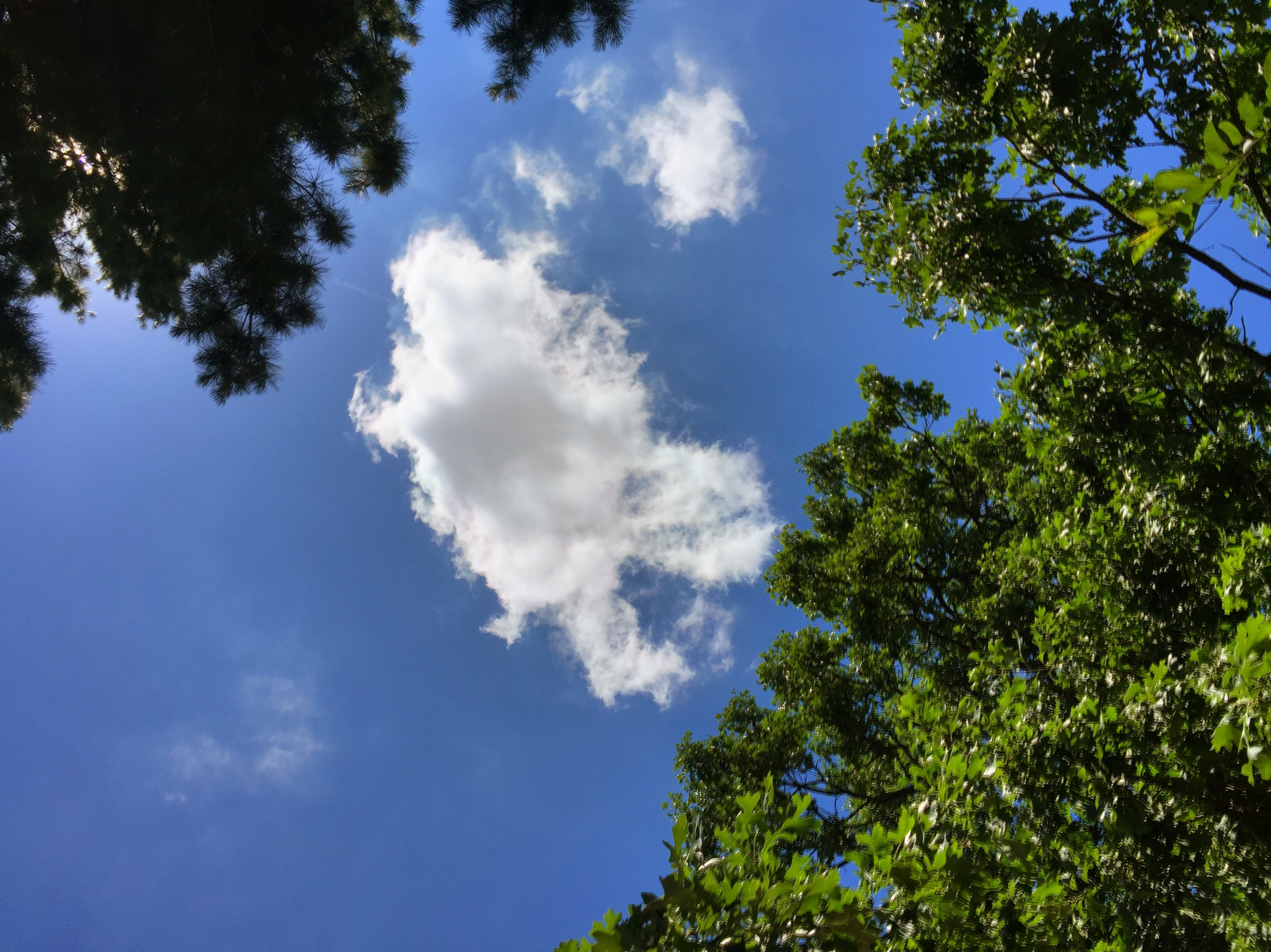 The clouds seem happiest in June