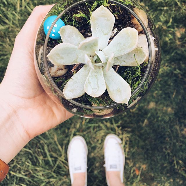 Come make a home for your new succulent & celebrate Earth Week with the HOP at DIY Terrariums! ~ Wednesday ~ 2 pm ~ the Beach ~