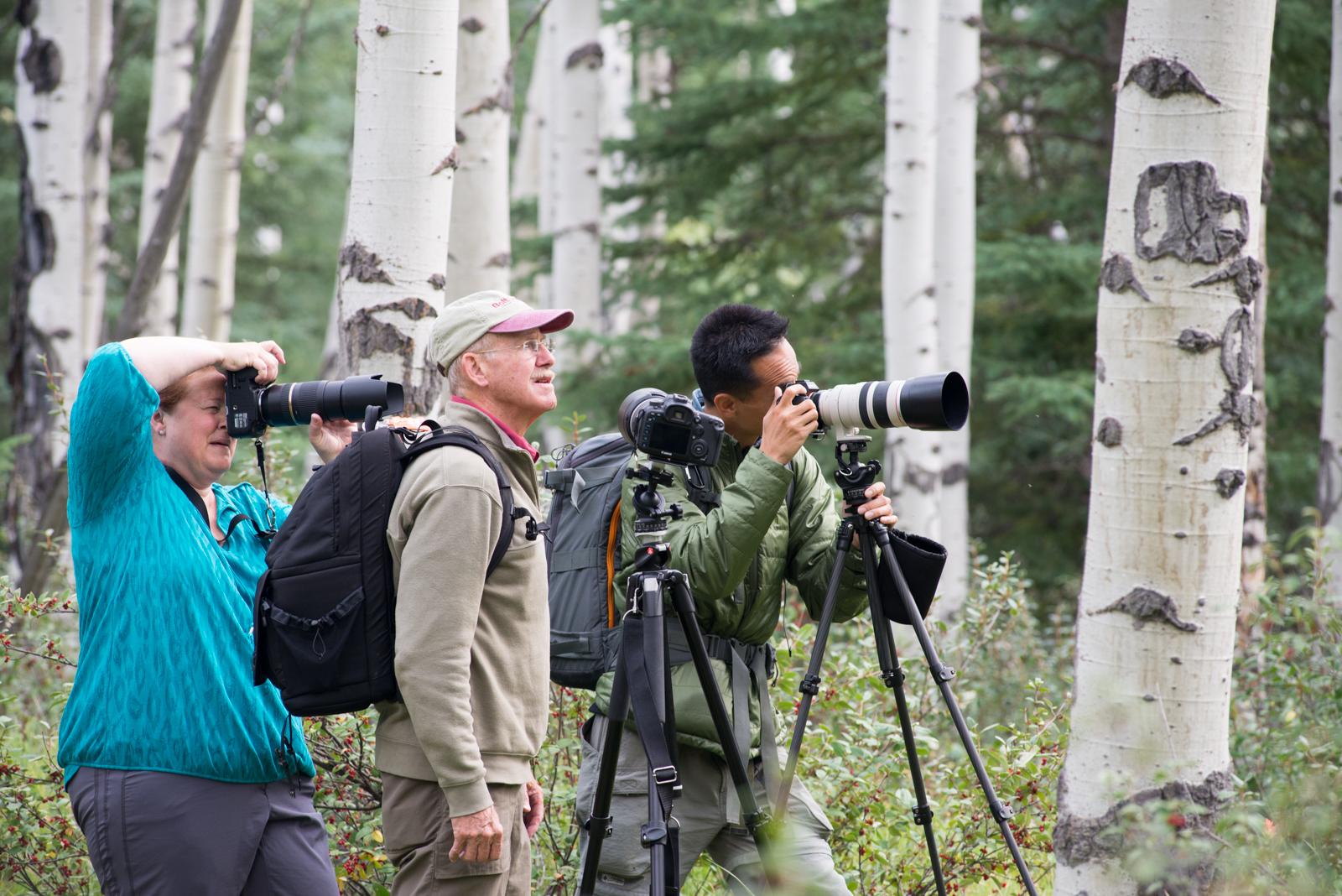 Shooting the Aspen Groves