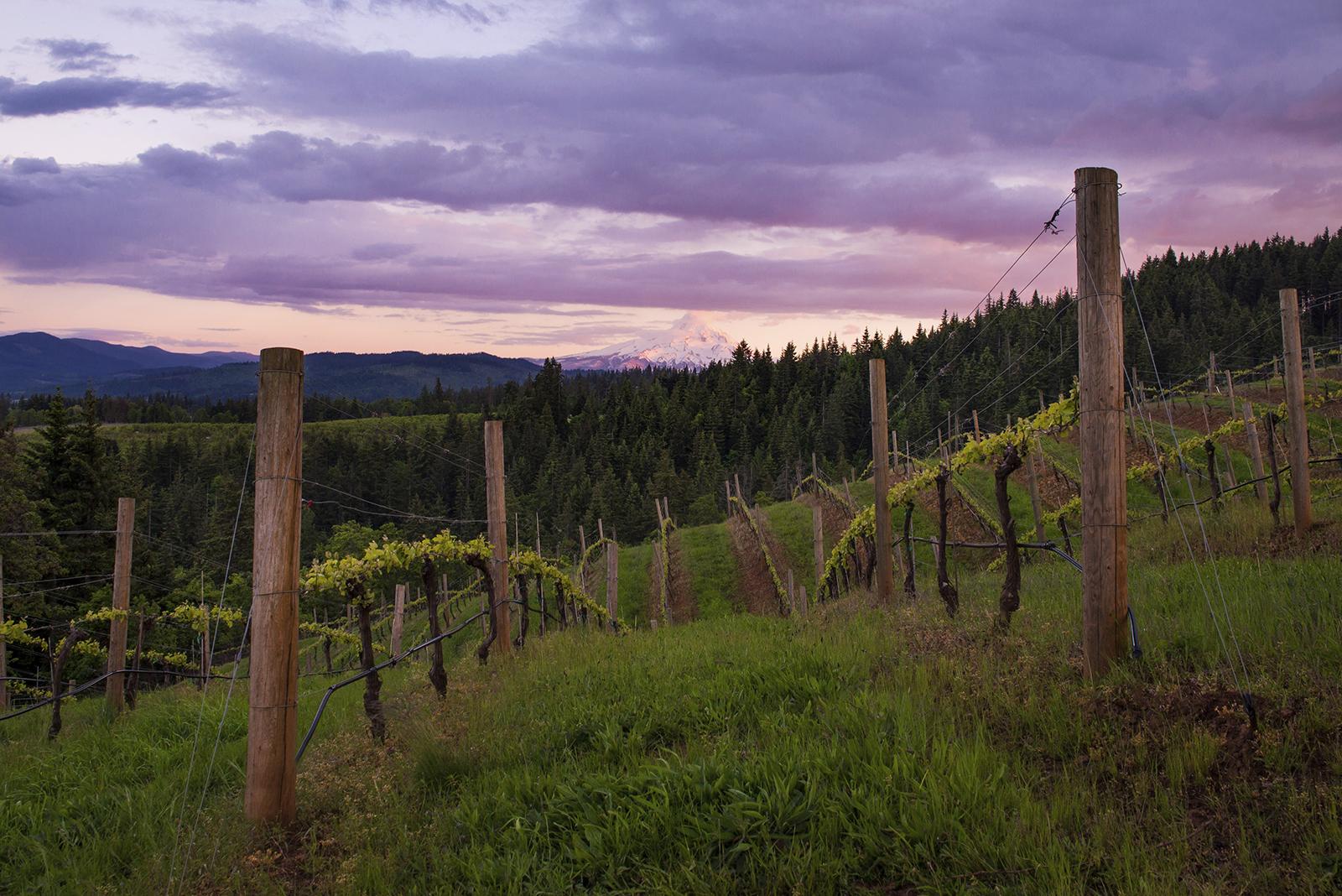 Phelps Creek Vineyard.jpg