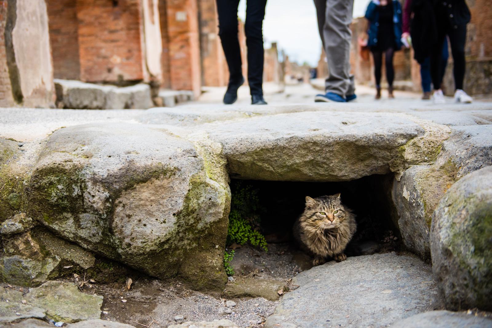 Cat of Pompeii.jpg
