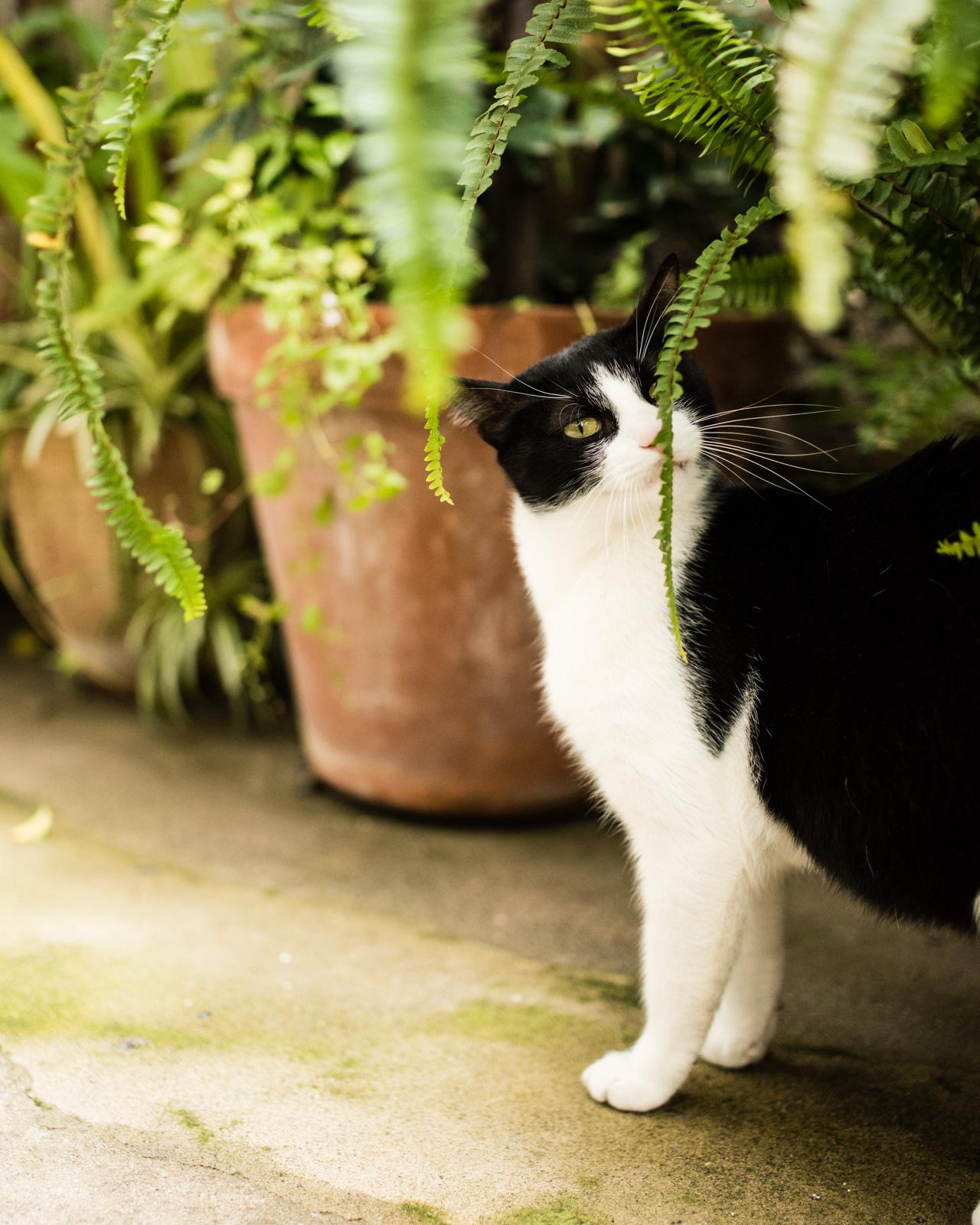 Fern Kitty.jpg