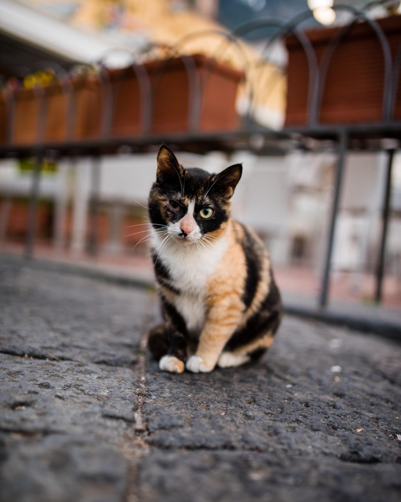 Flowerpot Kitty.jpg