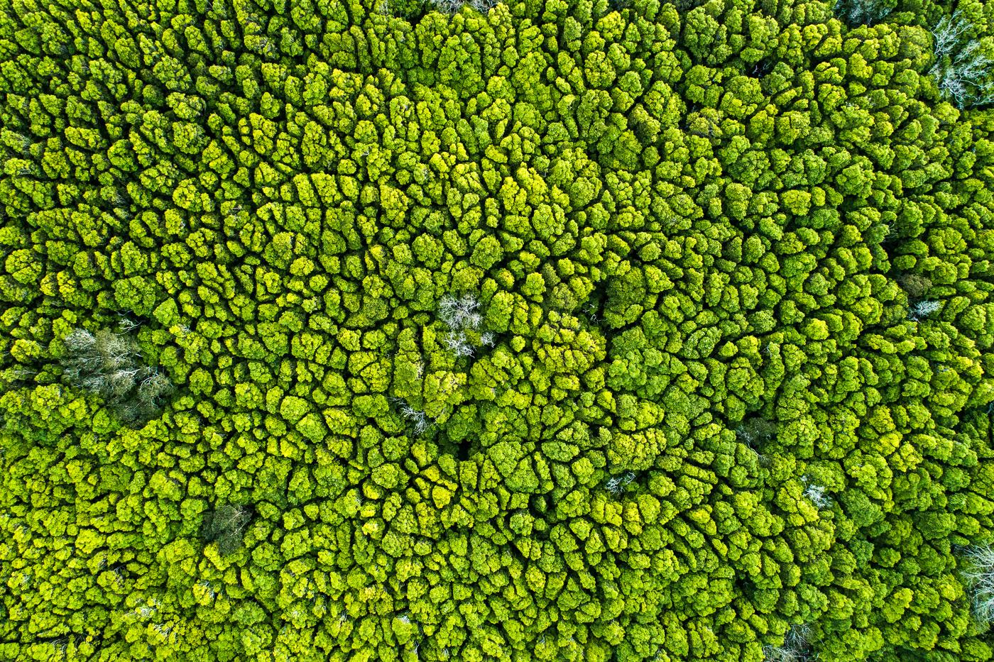 Broccoli Trees.jpg
