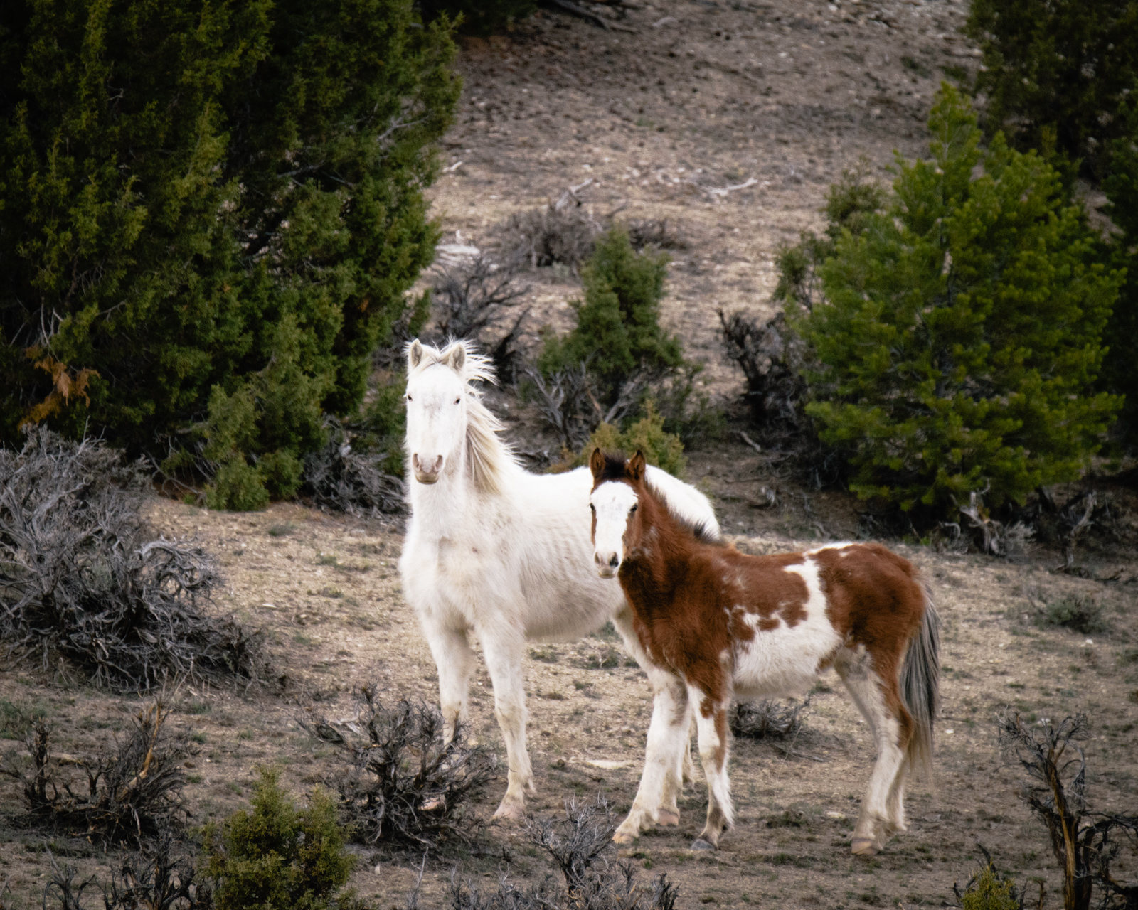 Copy of White Horse and Foal.JPG