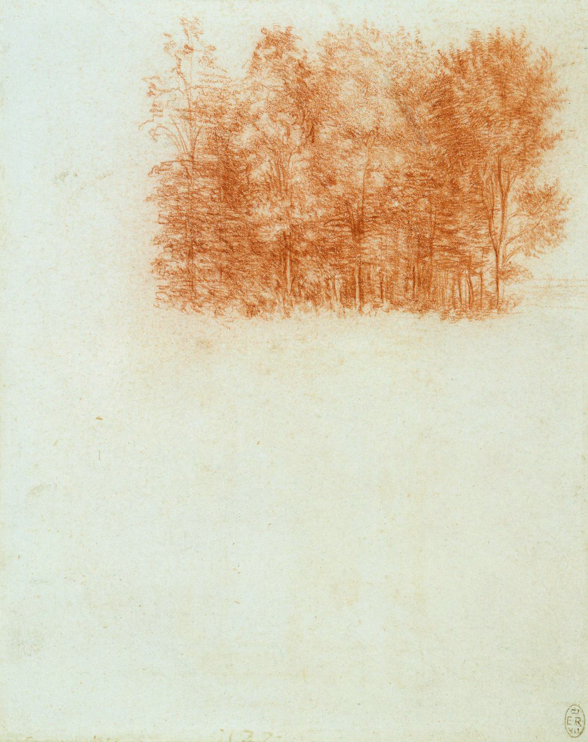 Leonardo da Vinci - Drawings - Plants - 12.jpg