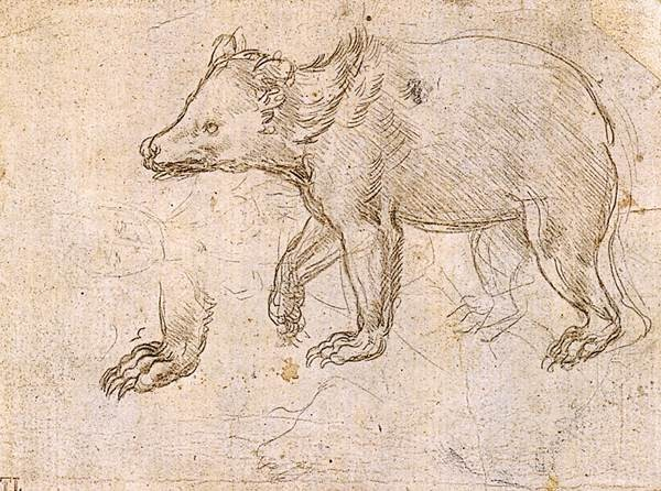 Leonardo da Vinci - Drawings - Animals - Bear.jpg