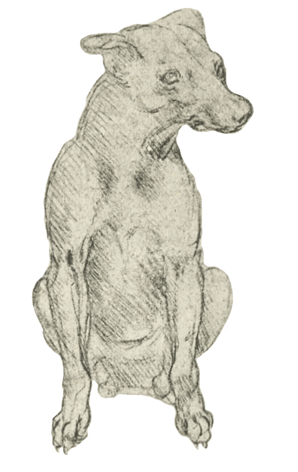Leonardo da Vinci - Drawings - Animals - Dog Cut out.JPG
