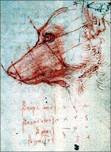 Leonardo da Vinci - Drawings - Animals - Dog Profile.jpg