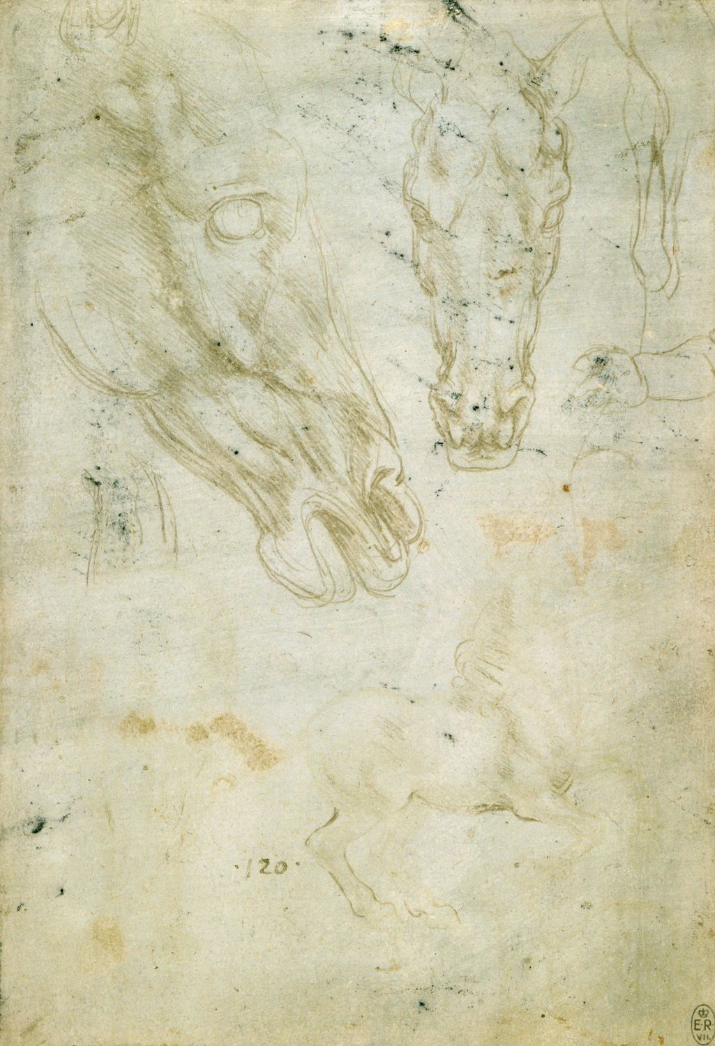 Leonardo da Vinci - Drawings - Animals - Horse Drawings.jpg
