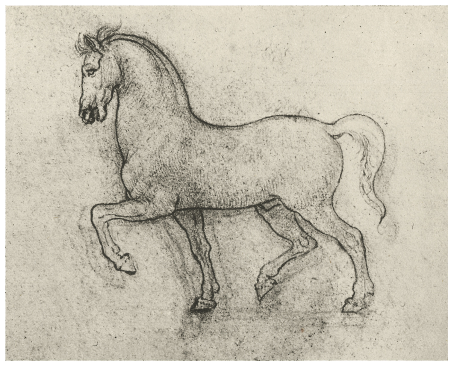 Leonardo da Vinci - Drawings - Animals - Horses - Pose.JPG