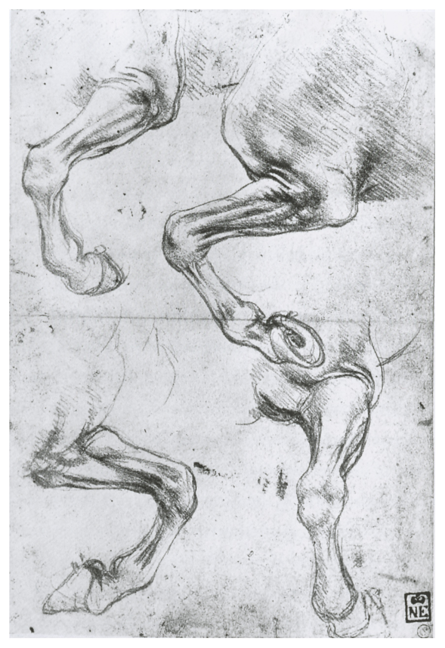 Leonardo da Vinci - Drawings - Animals - Horses.JPG