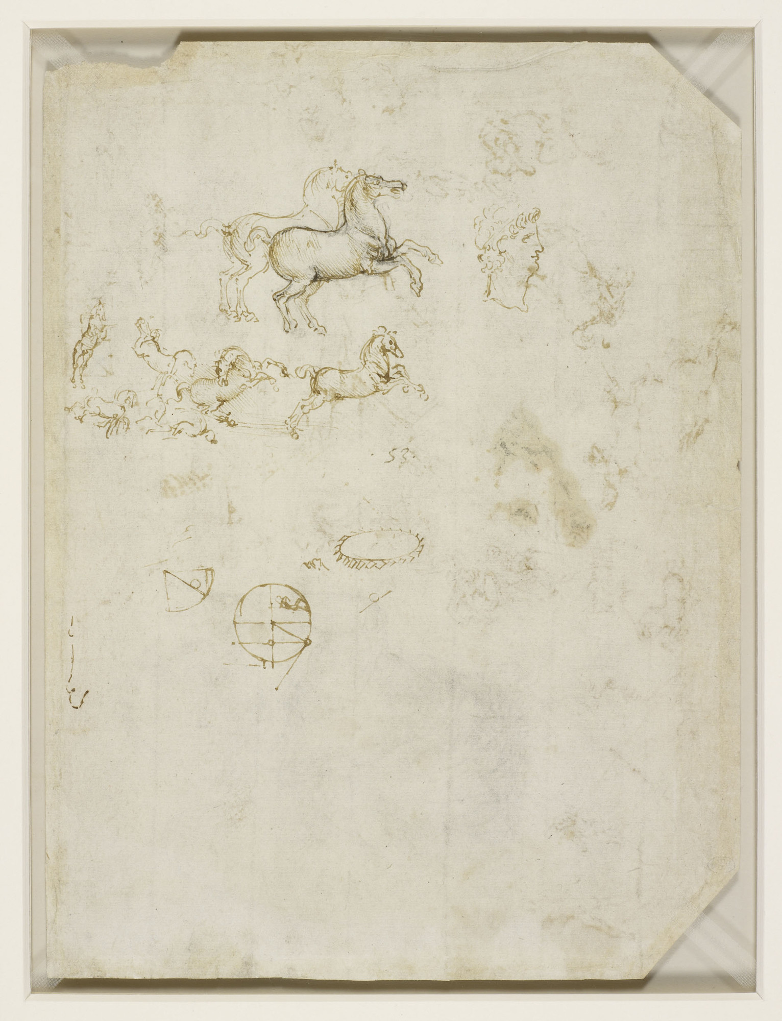 Leonardo da Vinci - Drawings - Animals -Horse head and Face in profile.jpg