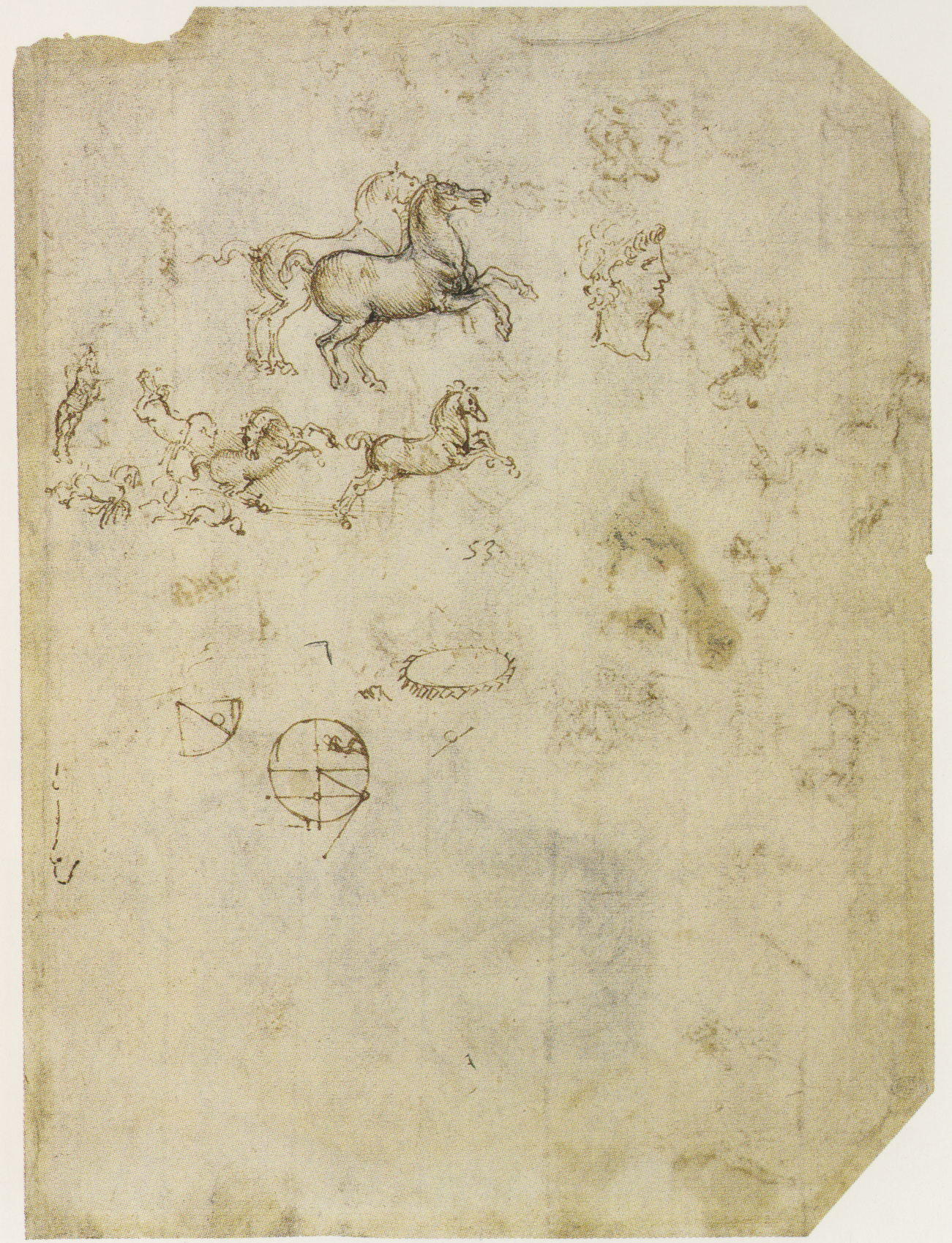 Leonardo-da-Vinci---Drawings---Animals--Horse Studies 1505.jpg