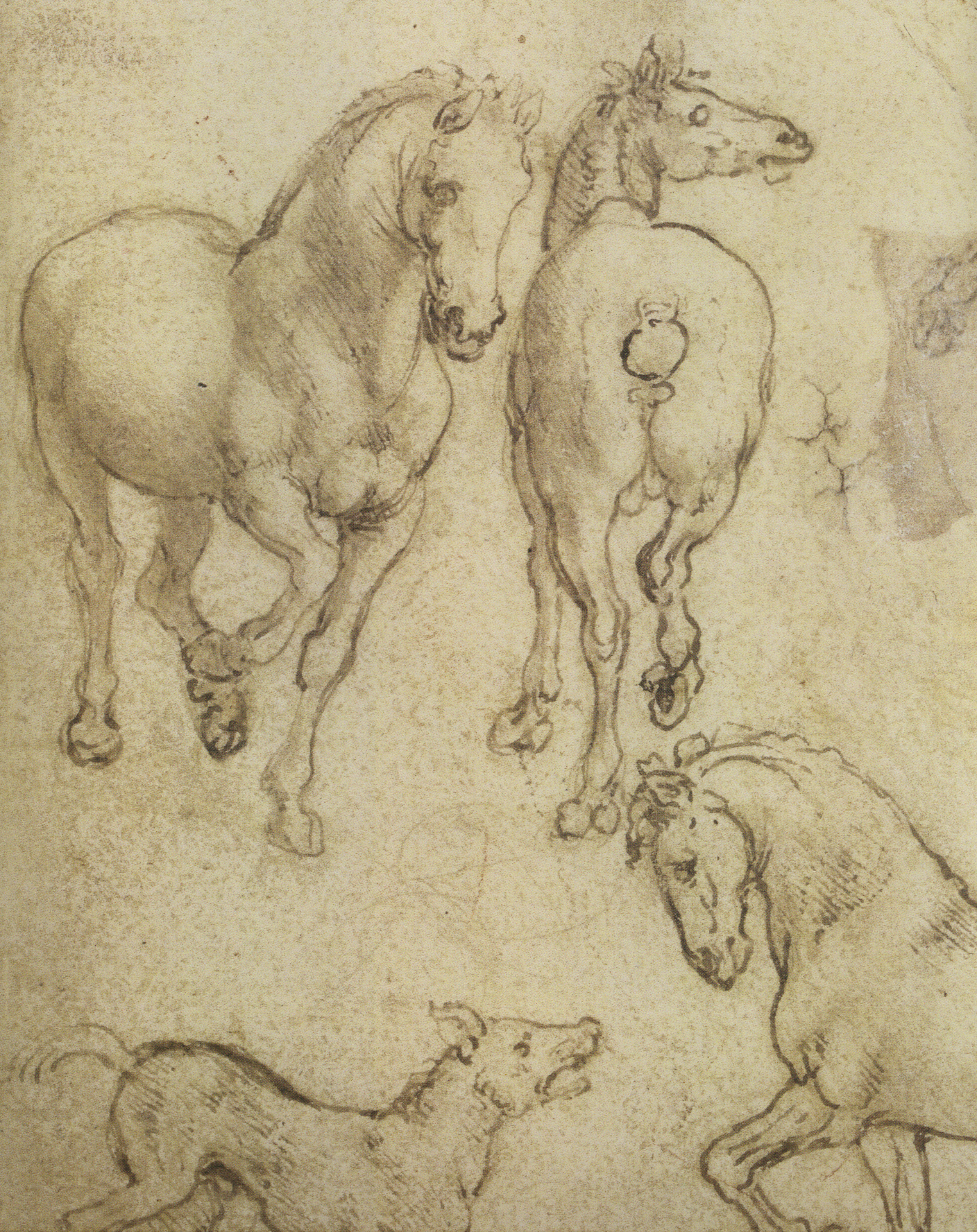 Leonardo-da-Vinci---Drawings---Animals--Horses 1.jpg