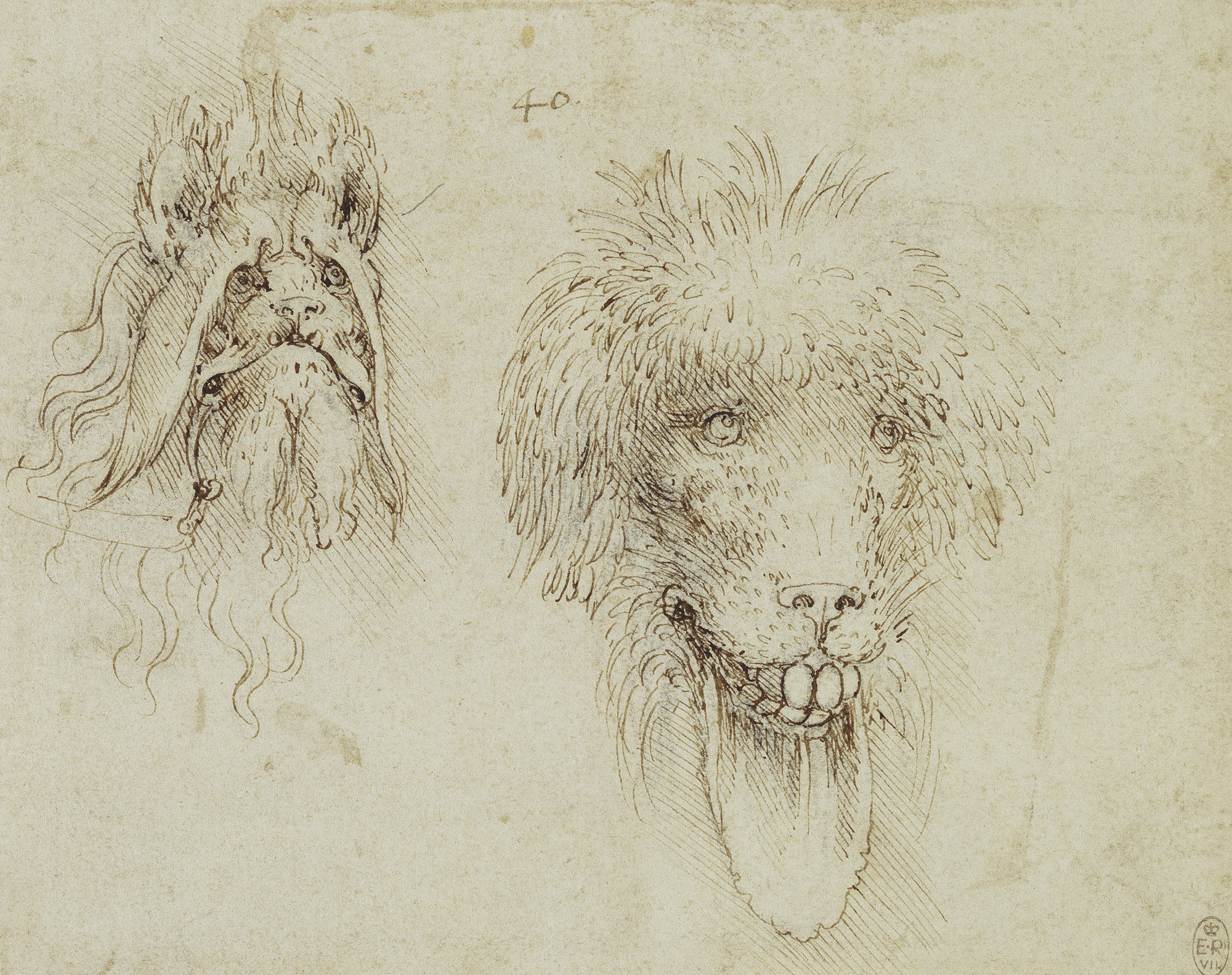 Leonardo-da-Vinci---Drawings---Animals---Ugly Dogs.jpg