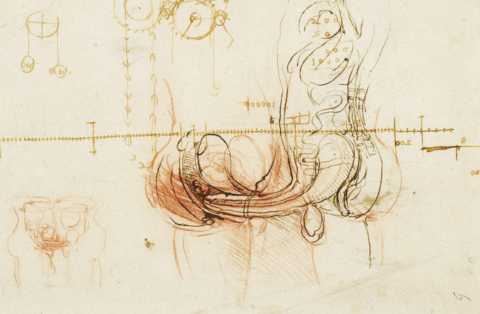 davinciworksanatomy-sex-mechanicsdetail.jpg