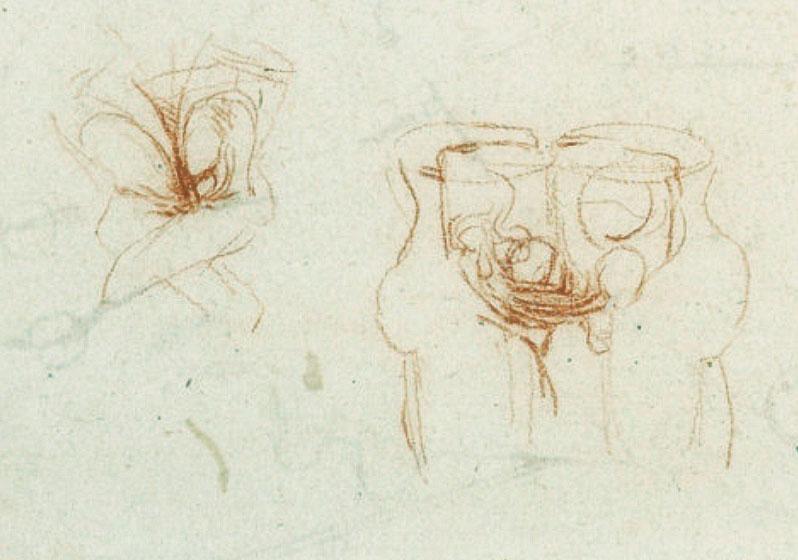 davinciworksanatomy-sex-mechanicsdetail2.jpg
