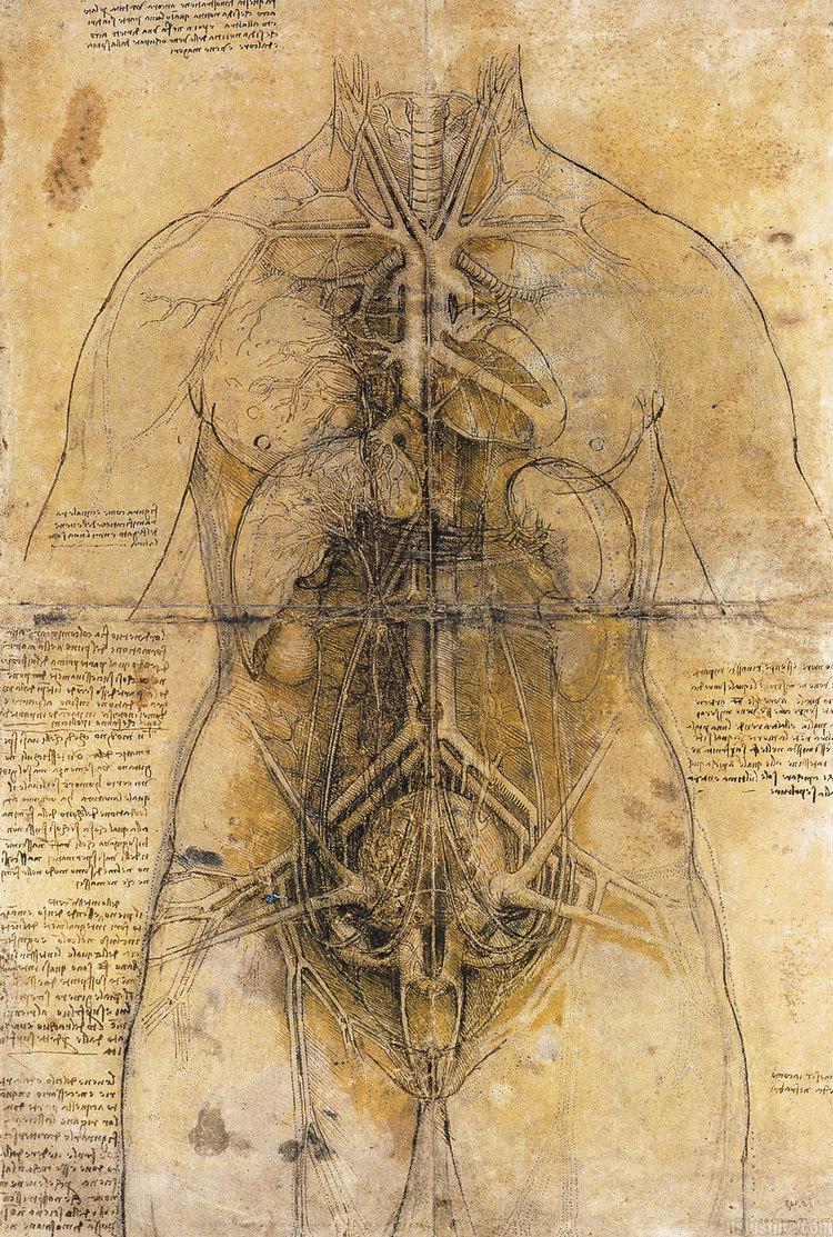 davinci-works-sketches-anatomy-woman-.jpg