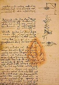 davinci-codex-flightofbirds-11-leafandgravity.jpg