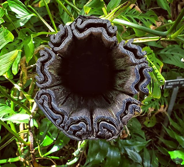 When you stare into the abyss the.. it's just a plant.  #blackhole #plant #pupil