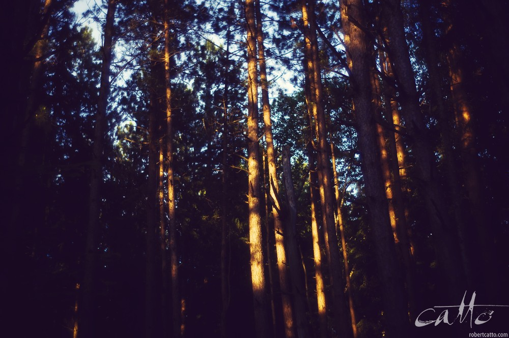 Late sun, Adirondack State Park, New York