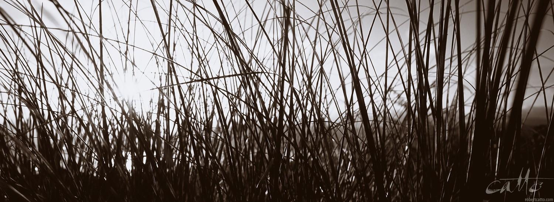 Grasses in Breaker Bay, Wellington New Zealand. [Click to embiggen]