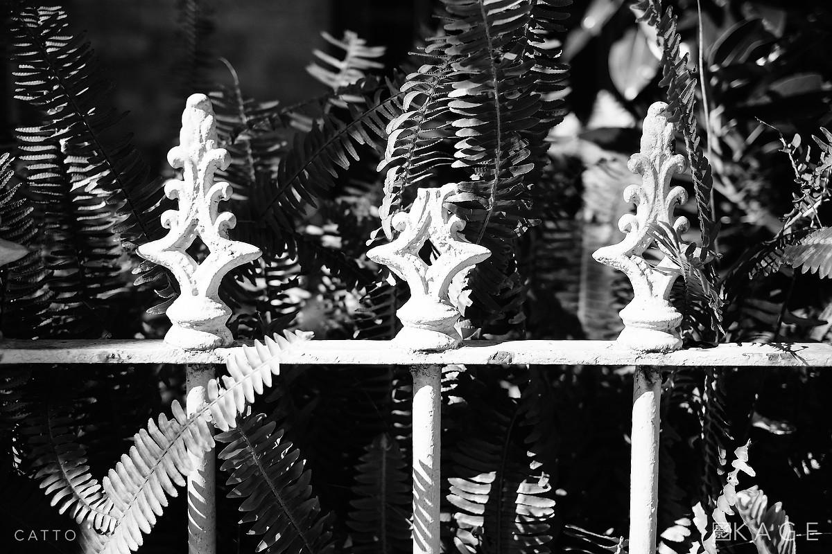 Fence & ferns, Surry Hills