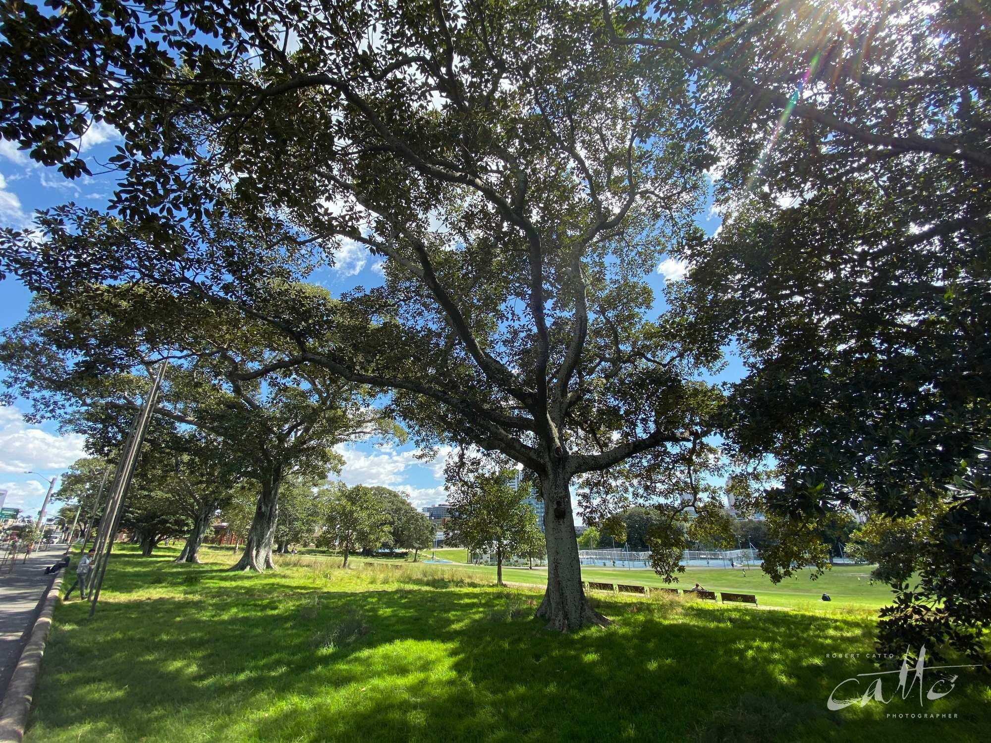 Prince Alfred Park, Surry Hills (iPhone 11 Pro - 0.5x wide lens)