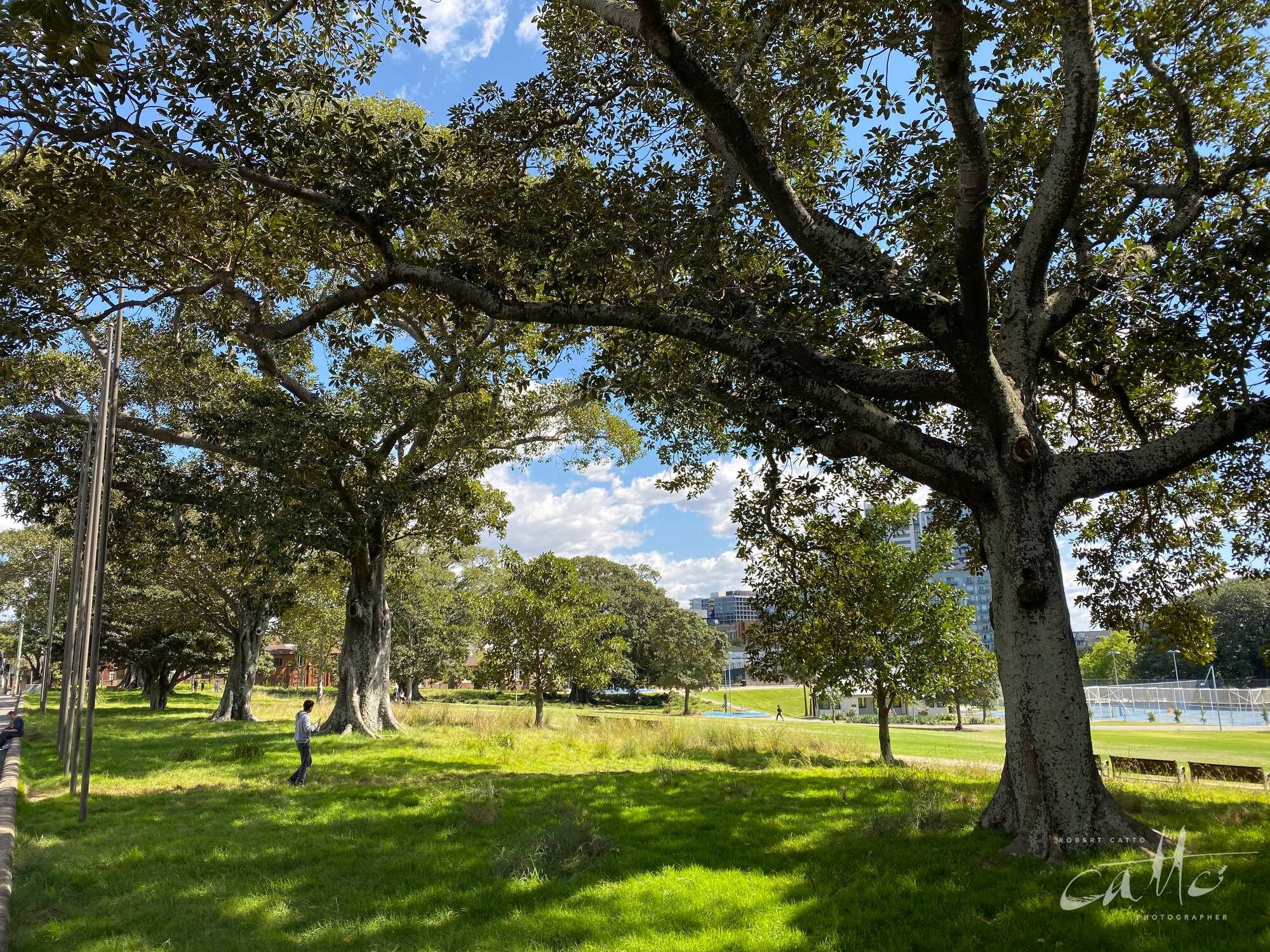 Prince Alfred Park, Surry Hills (iPhone 11 Pro - normal lens)