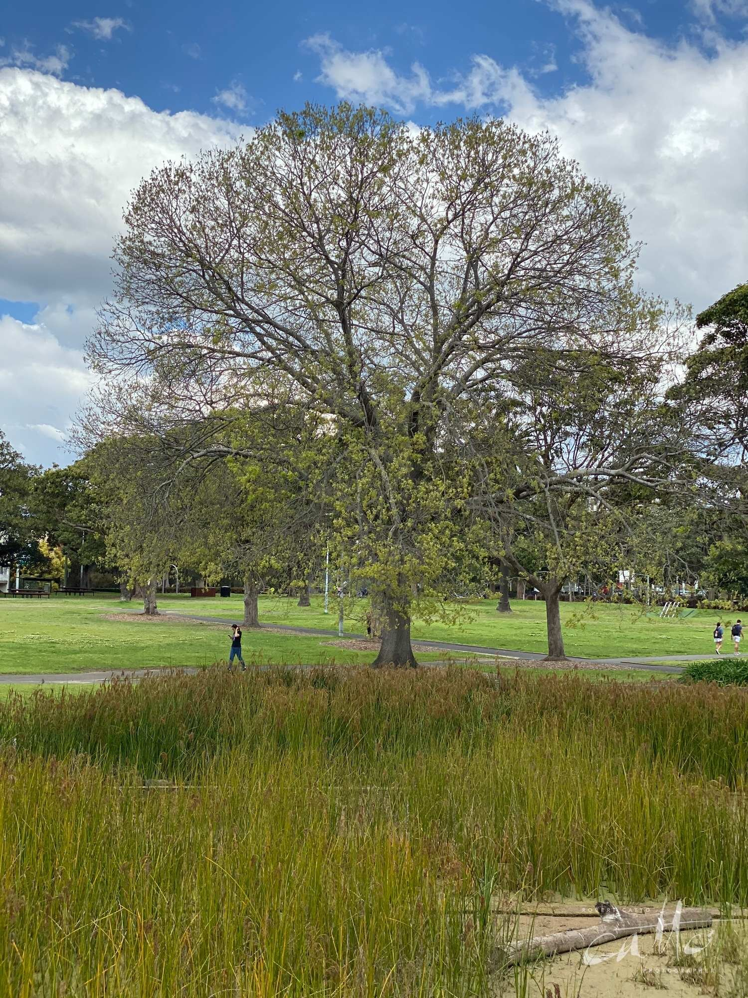 Victoria Park, Sydney (Iphone 11 Pro - 2x zoom lens)