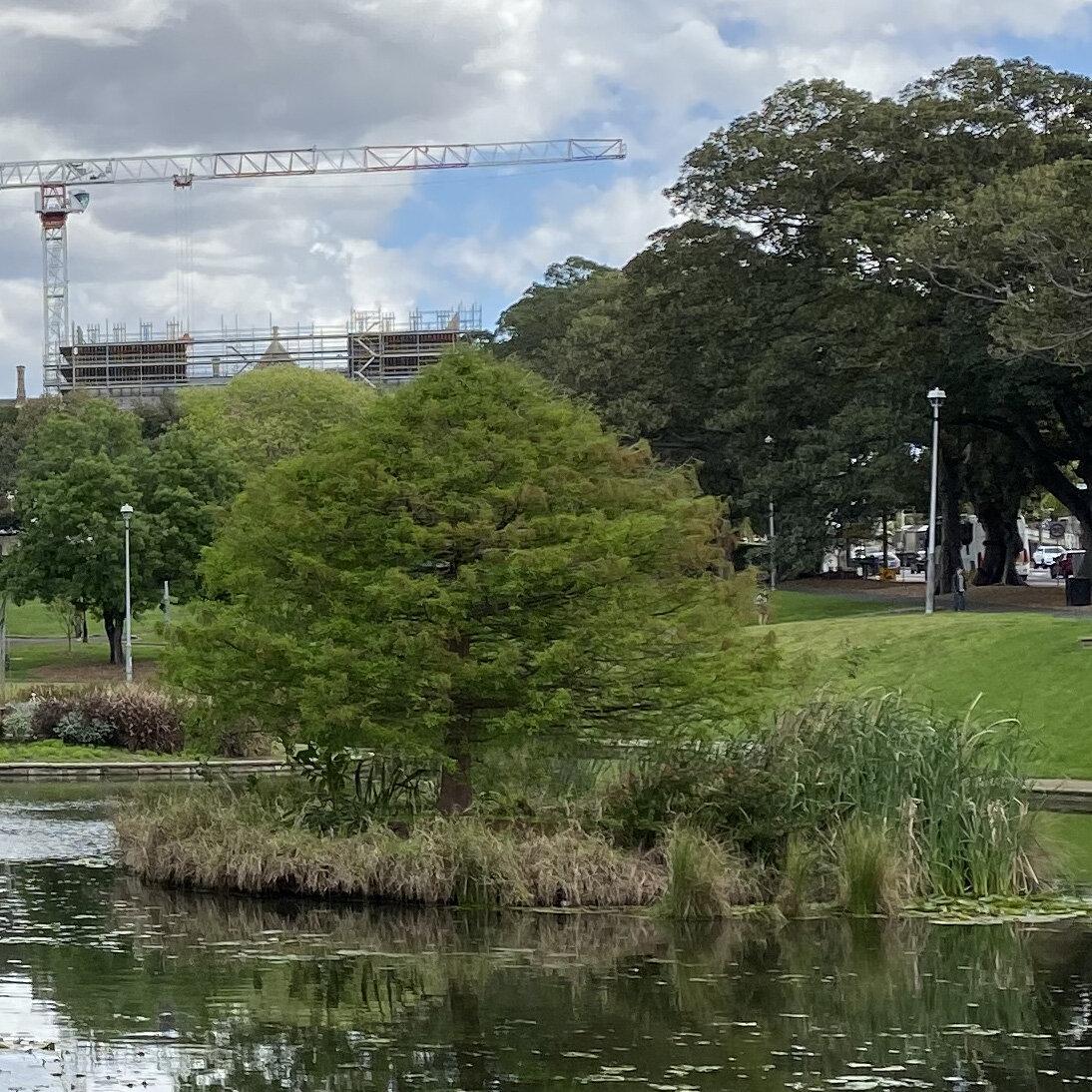 Lake Northam, Victoria Park, Sydney (iPhone 11 Pro - normal lens) - 100% crop