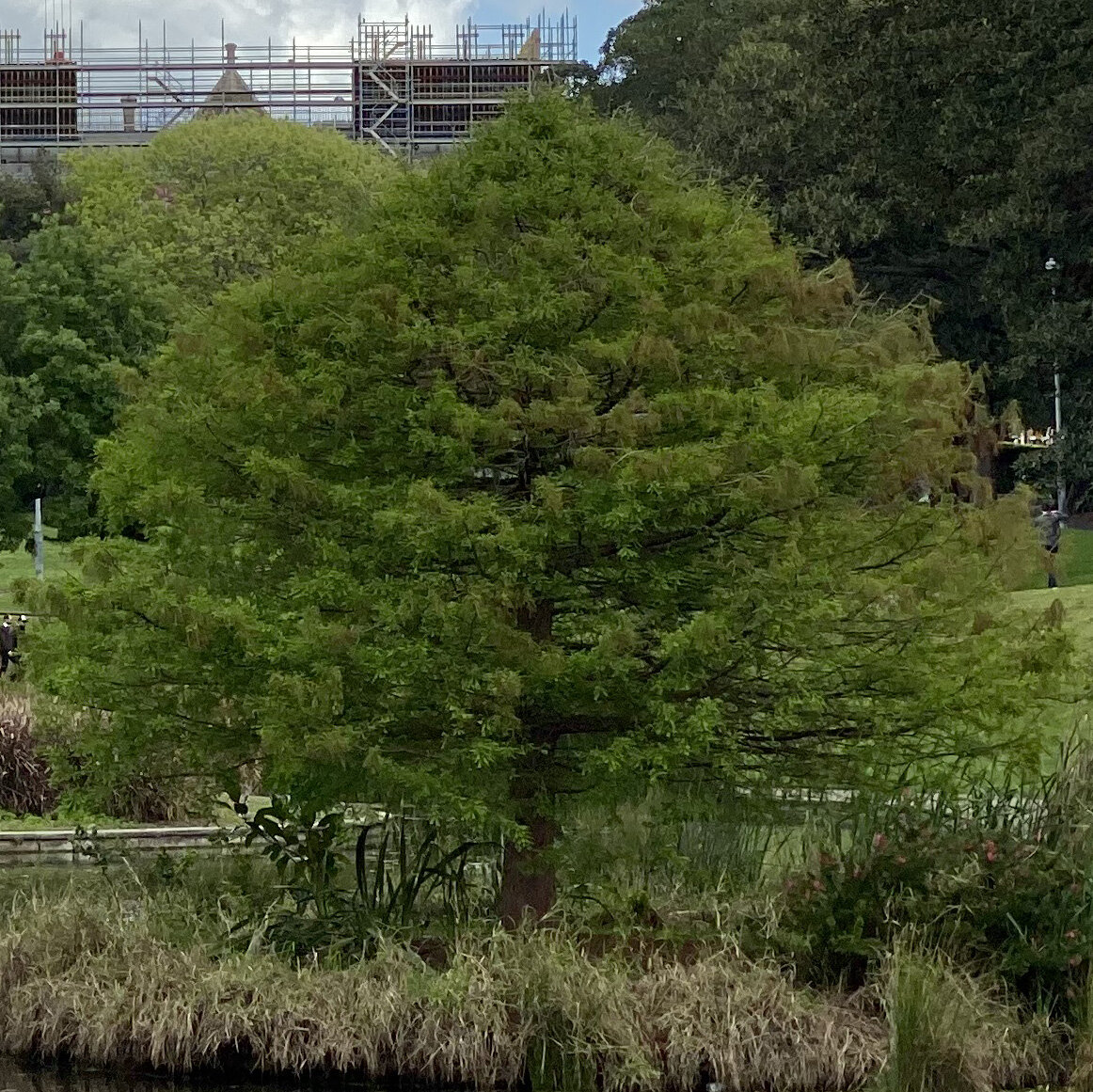 Lake Northam, Victoria Park, Sydney (iPhone 11 Pro - 2x zoom lens) - 100% crop