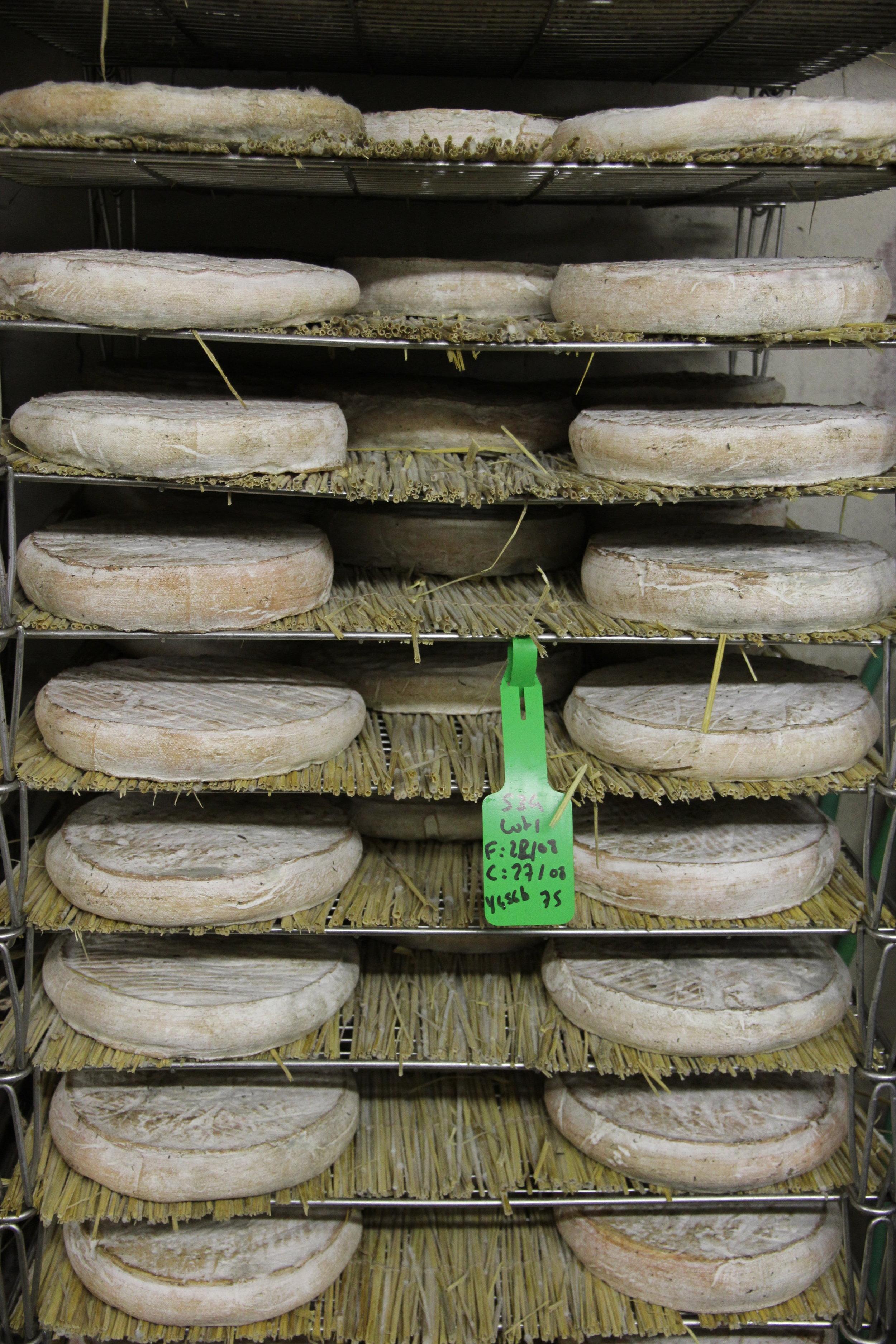 Les St Nectaires en cave. Ceux-ci sont retenus par le fermier et sa femme pour leur propre consommation ou vente. Ils ont environ 3 semaines.