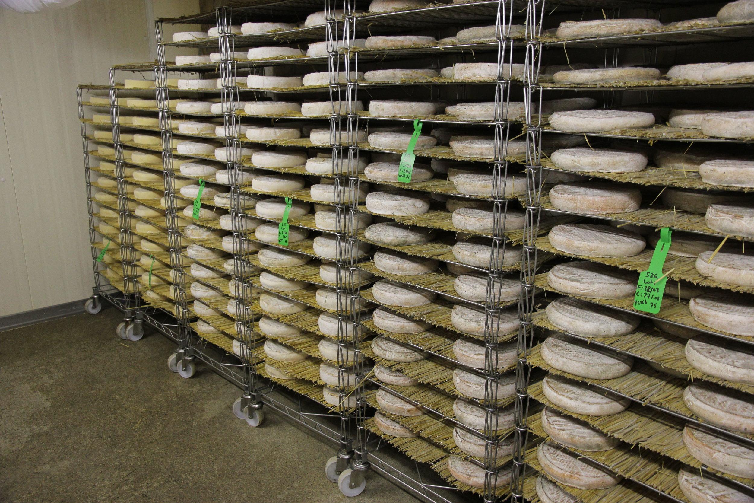 La « collection privée » de la ferme. Ici la famille affine ses propres fromages.