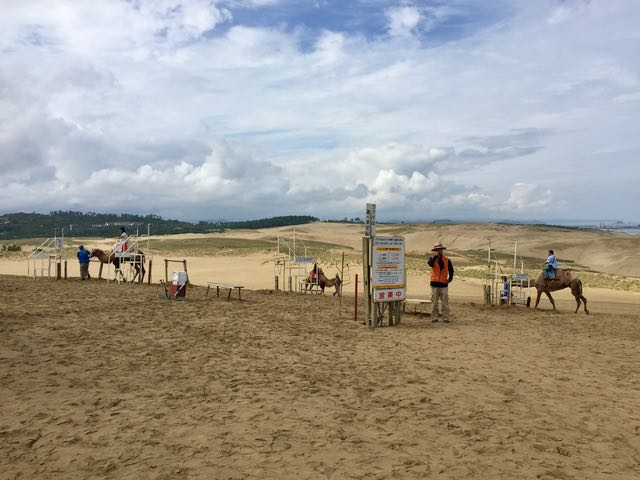 No camels are not native to Japan, but you can get a camel ride. One hump or two?