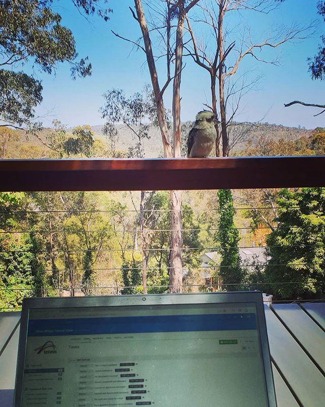 Working from home today with a little help from our resident kookabura.