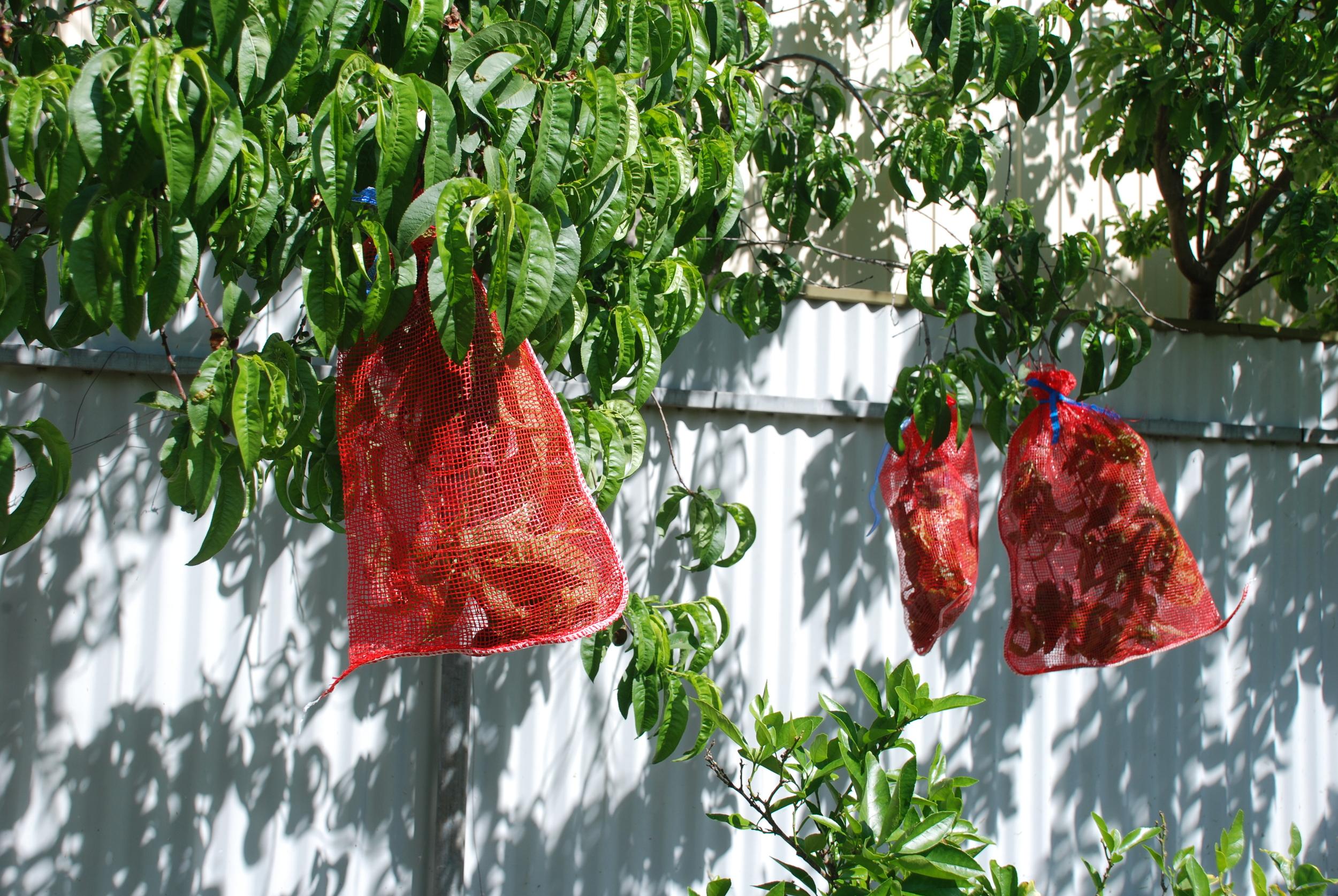 Orange Net Bags.jpg