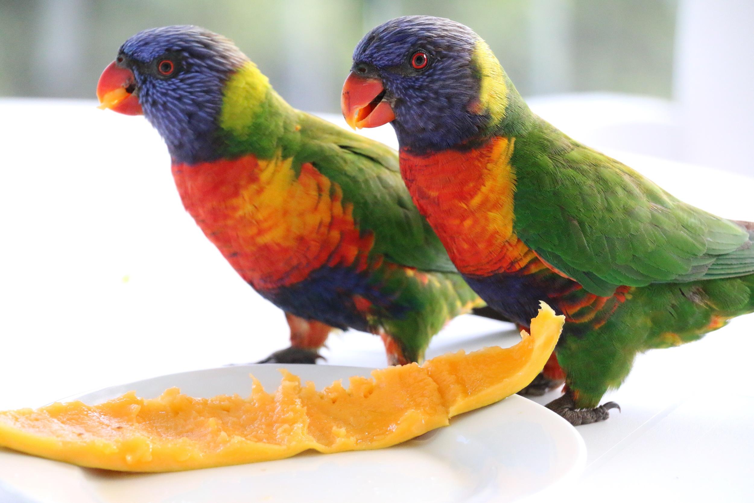 Bribing with Papaya.jpg