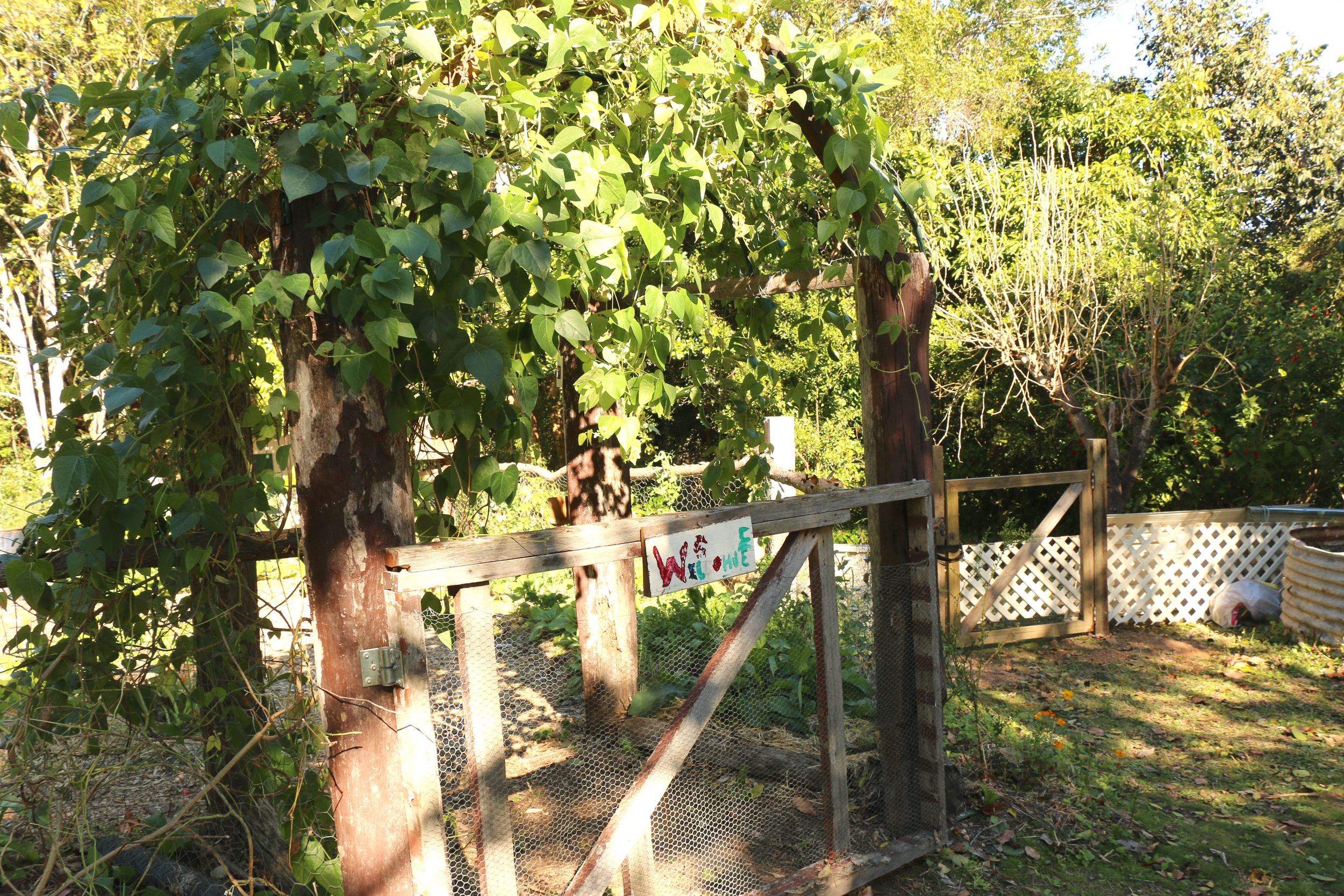 Vegie Patch Gate.jpg