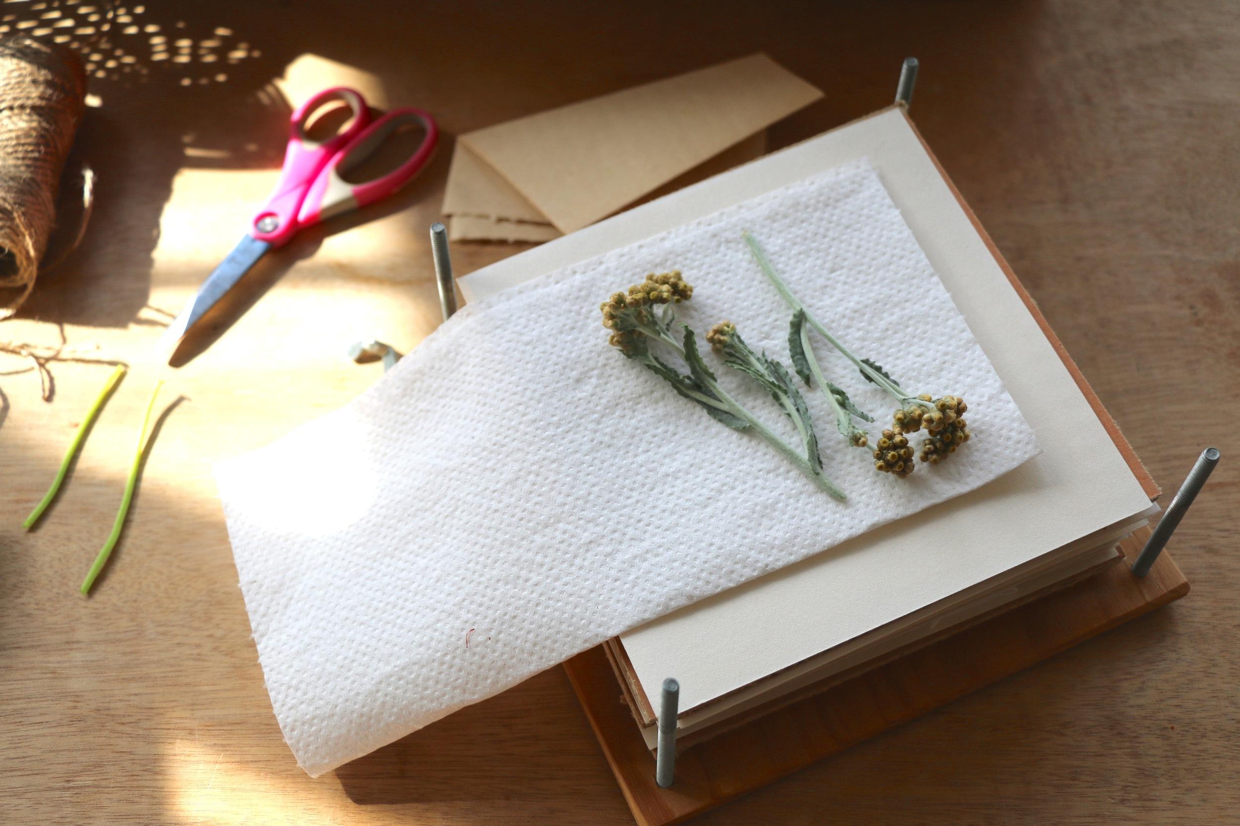 Pressing Flowers.jpg