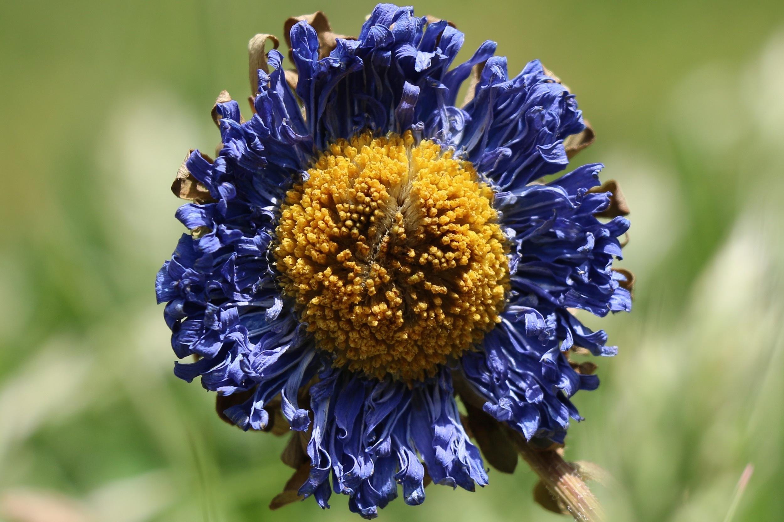 Dried Flower.jpg