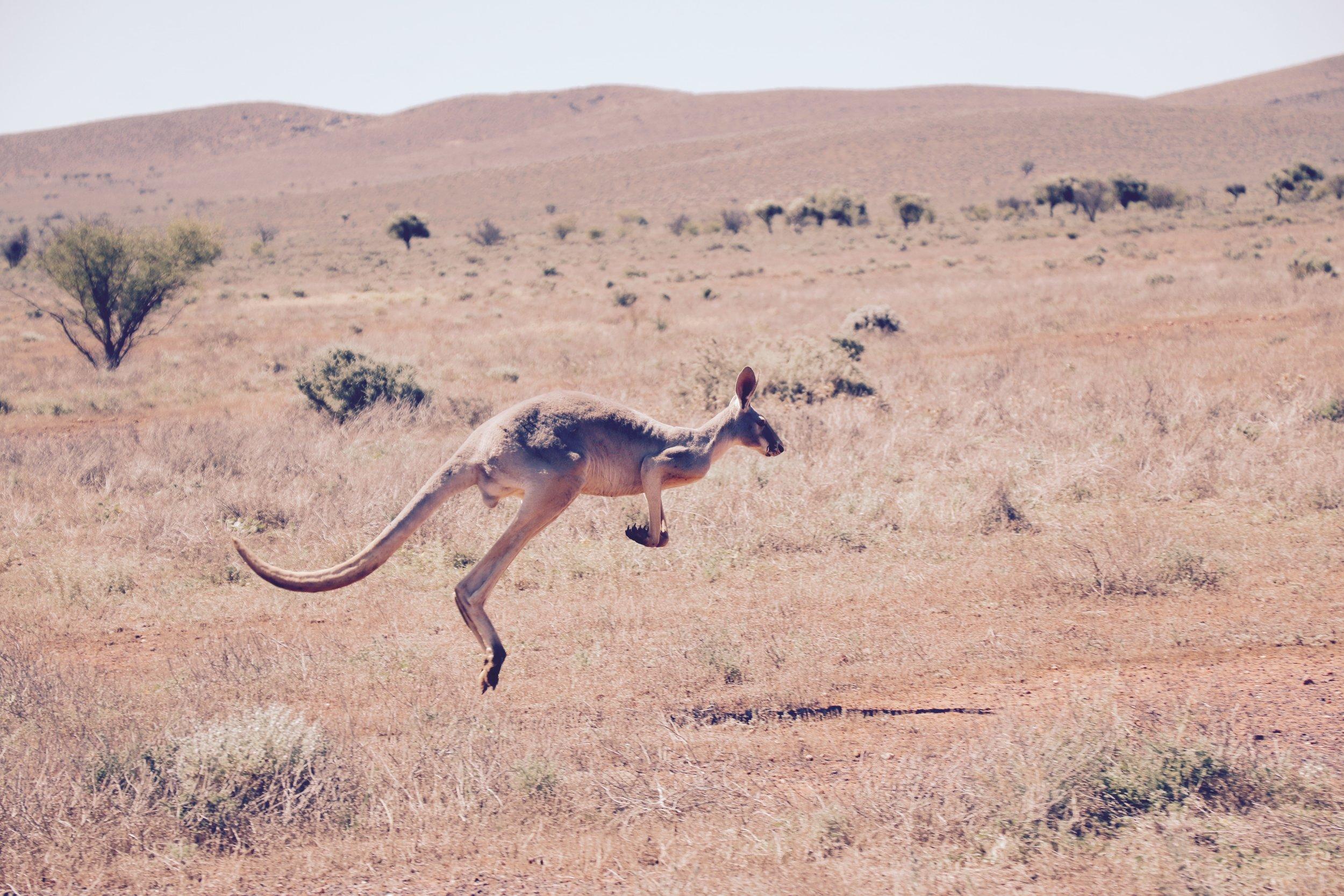 AUSTRALIAN LANDSCAPE - Bush, Outback, Flora & Fauna