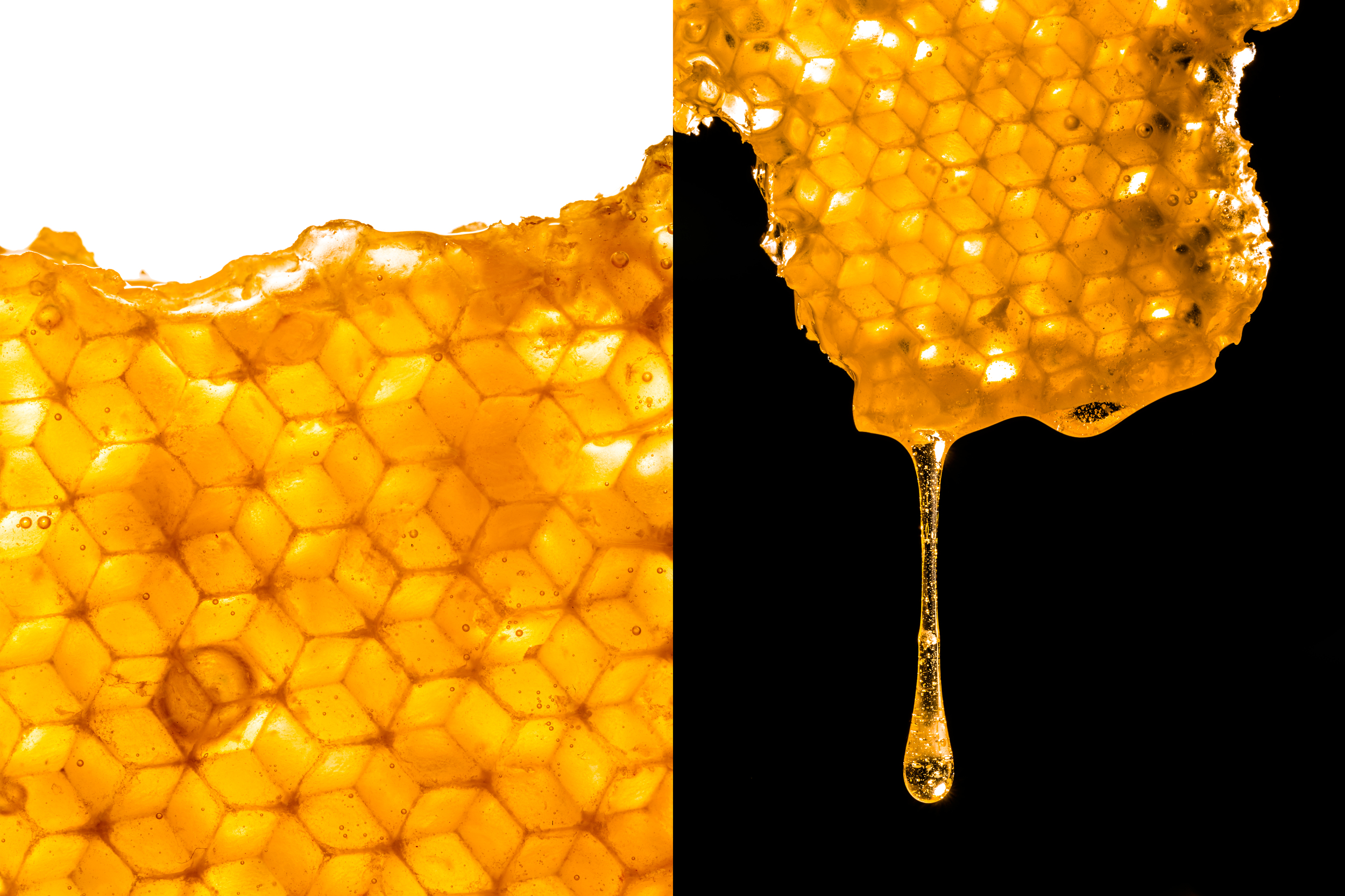 HoneycombStudio.jpg