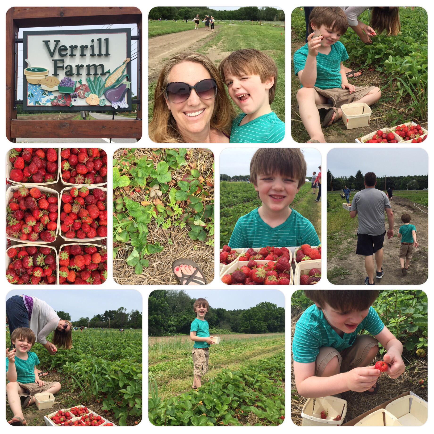 Strawberry picking at Verrill Farm in Concord, MA.
