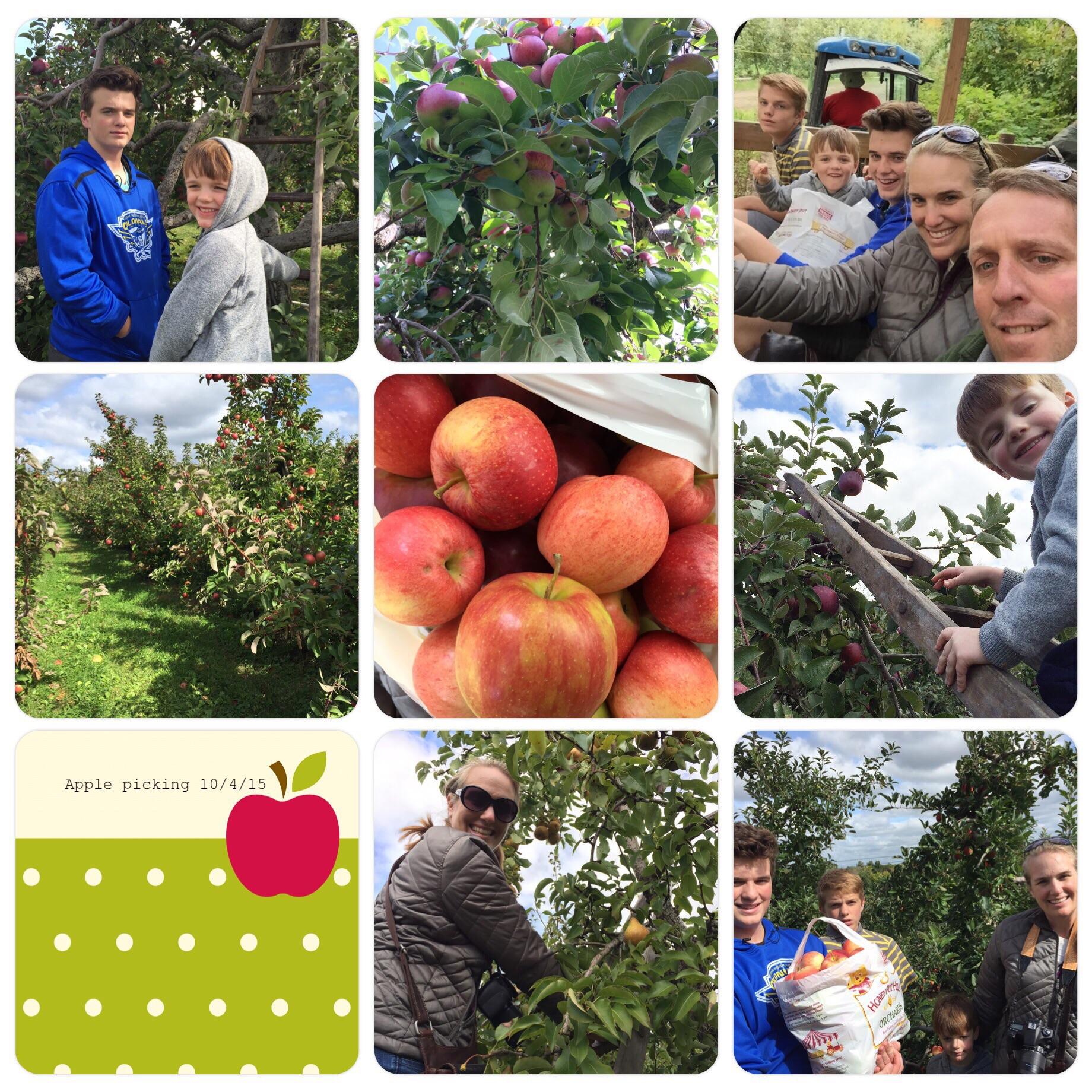 Apple Picking at Honey Pot Hill.